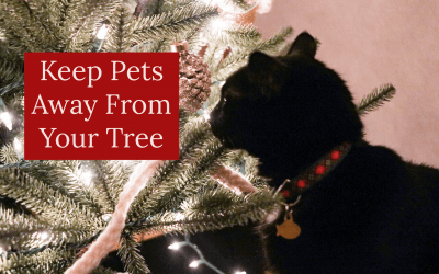 How to Keep Pets Away From Your Tree