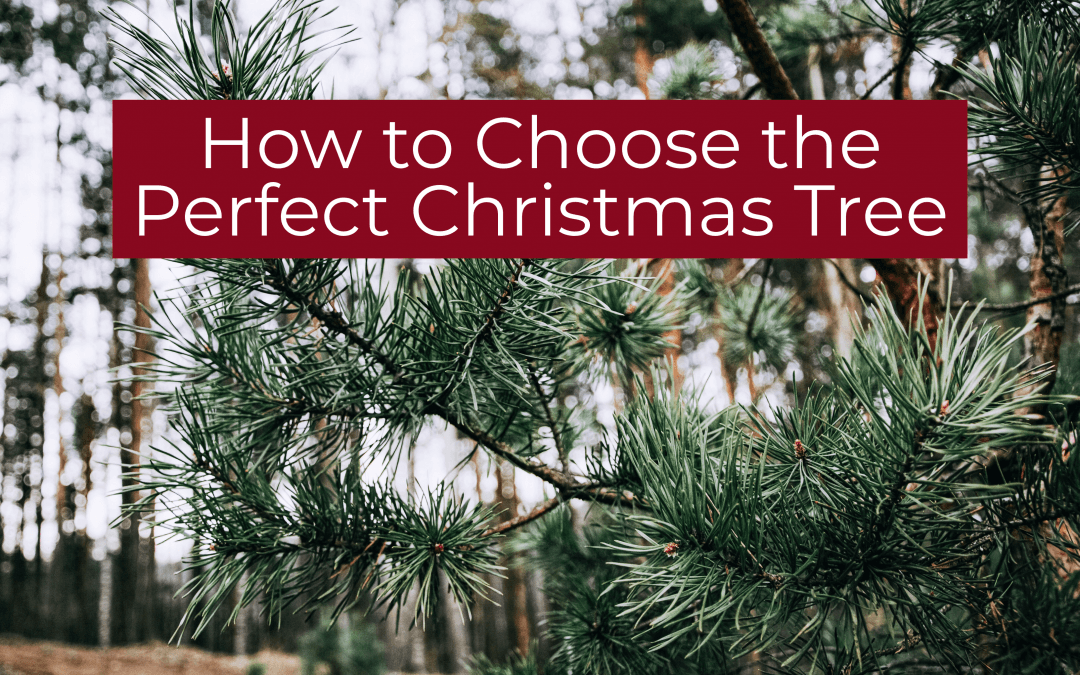 How to Choose the Perfect Christmas Tree
